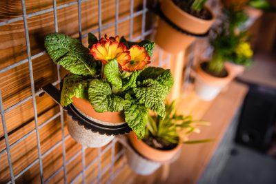 Verticale tuin panelen buiten aan schutting met bloembakken